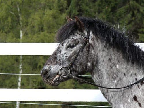 Ponys uv.