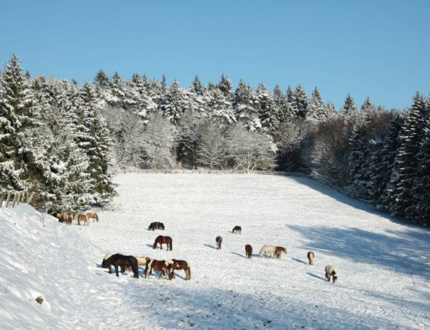 Winter3