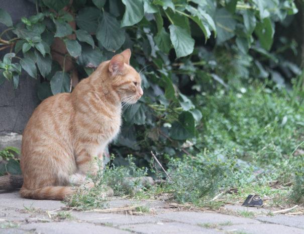 Findus1_Katze