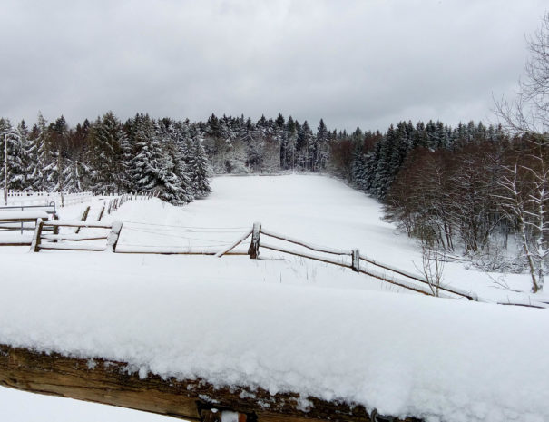 Winter46